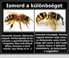 Animal memes Wasps Just Want To Ruin Your Day. Stupid Funny Memes, Funny Relatable Memes, Funny Posts, Funny Stuff, Animal Jokes, Funny Animals, Animal Antics, Funny Cute, Really Funny