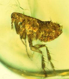 70 Best Forensic Entomology Images In 2020 Entomology Insects Insects Preschool