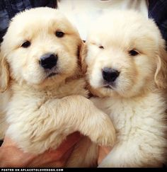 Two Fluffy Puppies @Mary Powers Powers Powers Powers Powers Lou Noble Carson