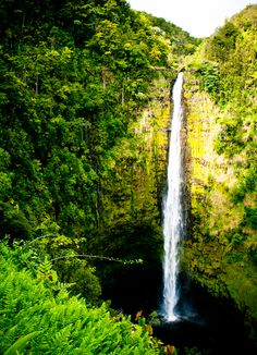 At over 440 feet, Akaka Falls is one of the tallest waterfalls in Hawaii. It's also one of the most beautiful natural attractions and easily accessed via a short hike on the east side if Hawaii Island.
