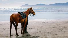 Having a stroll with this beautiful horse along Paekakariki beach