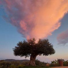"""Emma Askari on Instagram: """"The sky is fuming over a tree. Wait for a prophecy #profecias #ibiza"""""""