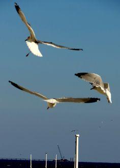 Flying in the ocean breeze