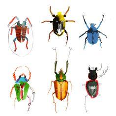 bugs...annabel wright