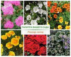 Жаркие дни ускоряют смену цветовой гаммы в саду, и на сцену выходят самые яркие оттенки.