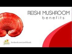 Reishi Mushroom | What is Reishi Mushroom?