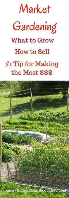 Market Gardening - sell at the Farmers Markets. Here's what you want to know.