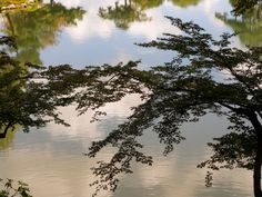 Serene Japanese Garden Pond - Kanazawa, Japan. Buy this print: http://www.bencrosbiephotography.pixieset.com/photography