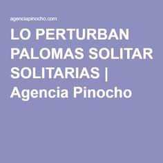 LO PERTURBAN PALOMAS SOLITARIAS | Agencia Pinocho