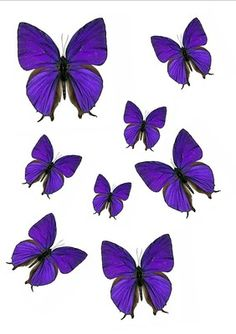 56 x Purple Butterflies Mixed Sizes Wedding Birthday Cake Toppers Edible WB5 | eBay