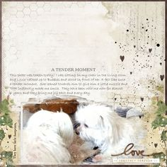 """My two little lovebirds. <br /><br /><br />Katie Pertiet:<br /> <span style=""""text-decoration:underline""""><span style=""""font-weight:bold""""><a rel=""""nofollow"""" href=""""http://www.designerdigitals.com/digital-scrapbooking/supplies/product_info.php/products_id/20827"""" target=""""_blank"""" class=""""bb-url"""">Watery Scribbles Brus..."""