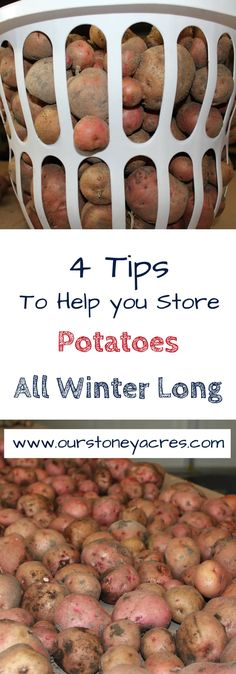 Storing Potatoes, How To Store Potatoes, Storing Onions, Growing Vegetables, Fruits And Veggies, Organic Gardening, Gardening Tips, Vegetable Gardening, Flower Gardening
