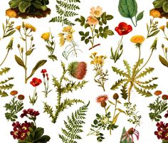 vintage botanical wildflowers fabric by redbriarstudio on Spoonflower - custom fabric