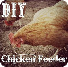 DIY chicken feeder - just use some leftover orange juice containers to make a chicken feeder for FREE!