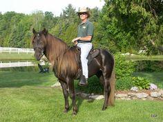 Rocky Mountain, Kentucky Mountain, Mountain Pleasure Horse Breeders