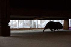 I heard a watwatwat under the bed?... ;)