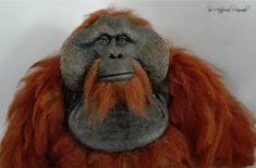 museum replica orangutan/ orangutan artificial Orangutan, Museum, Sculpture, Animales, Museums
