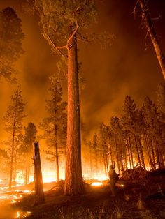 """From """"Massive Wildfires in New Mexico & Colorado"""" story by Accu Weather on Storify — http://storify.com/breakingweather/massive-wildfires-in-new"""