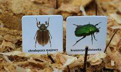 Memo z polskimi owadami <3