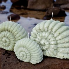 Nautilus Shell Candles in a set of 3 sizes.  Great for the bathroom, the beach house or as a housewarming gift.