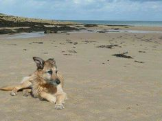 Mr Ben relaxing on Lligwy beach on Anglesey
