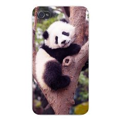 Apple Iphone Custom Case 5 5s Snap on - Cute Baby Panda Bear Cub Climbing Tree. New Design Hard Back Cover for cell phone. Shock absorbable and anti-bump for protection. Full metal aluminium shell for heavy-duty protectin of your gadget. Give your comprehensive protection. A wonderful lightweight garment for your precious iPhone.