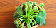 Você ganha uma planta, ela chega linda e, de repente, começa a ficar murcha…