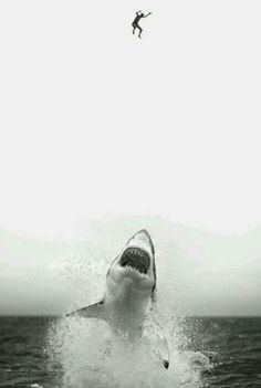 Black and white photography, Jump, Jaws Wind Surf, Shark Bait, Great White Shark, Shark Week, Ocean Life, Sea Creatures, Belle Photo, Under The Sea, White Photography