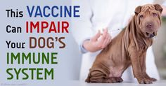 Over a 6-week period, 5 dogs that recently received the leptospirosis vaccine were taken to veterinary neurologists with symptoms of autoimmune meningitis. http://healthypets.mercola.com/sites/healthypets/archive/2015/06/10/vaccine-adverse-reaction.aspx