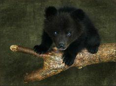 Little bear by Lola
