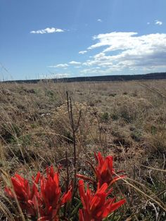 #discoverSFNHT Discover nature at Fort Union National Historic Park -- Indian paintbrush.
