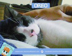 Mas dulce que una galletita de chocolate, Oreo duerme junto a Debora y disfruta de una vida como se debe! Gracias Debora por adoptarlo!