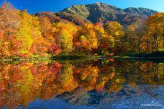 Golden Autumn leaves of Karikomi-Lake(1,095m) by Masahiro Iizuka