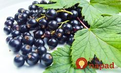 5 Health Benefits of Blackcurrants Us Health, Health Tips, Weight Loss Program, Weight Loss Tips, Home Canning, Herbal Medicine, Fruits And Vegetables, Health Benefits, Salud