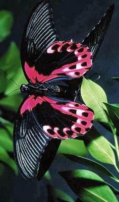 butterfly Learn about true bugs also called, Hemiptera Butterfly Kisses, Butterfly Flowers, Butterfly Wings, Mariposa Butterfly, Bird Wings, Purple Butterfly, Butterfly Dragon, Flowers Nature, Beautiful Bugs