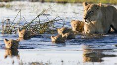 Botswana Gruppenreisen - Botswana Rundreisen und Botswana Rundreisen in Kleingruppen mit deutscher Führung beim Veranstalter günstig buchen.