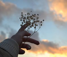 cool phone backgrounds - cool wallpapers for your phone - cool phone wallpapers Nature Aesthetic, Flower Aesthetic, Aesthetic Photo, Aesthetic Pictures, Aesthetic Backgrounds, Aesthetic Wallpapers, Hand Photography, Artsy Photos, Cool Wallpapers For Phones