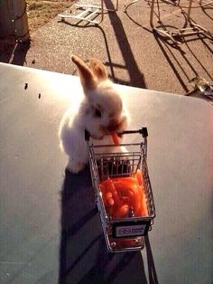 Bunny gone shopping
