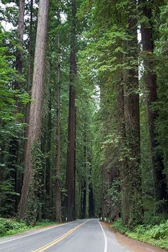 """Old Hwy 101 AKA """"The Avenue of the Giants"""""""