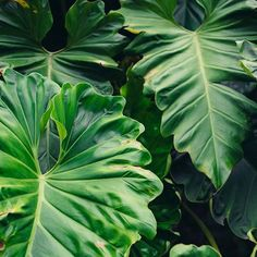 via: @upleafting _______________________ #plantsinfocus _______________________ #tropicalplants #greenhouse #glasshouse #botanicalpickmeup #urbanjunglebloggers #urbanjungle #vscoplants #plantspo #plantlife #botanical #instaplant #plantstagram #jungalow #plantsarefriends #cactus #botanicalgarden #jungalowstyle #jungle #planta #plantstrong #palms #plantsofinstagram #greenplant #Regram via @plantsinfocus