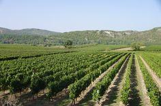 Route gourmande des vignobles du Sud-Ouest