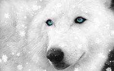 Wolf in sneeuw