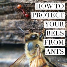 Learn how to keep ants out of your hives. You can start by placing cinnamon sticks where ants will try to make a path into the hives. Beekeeping For Beginners, How To Start Beekeeping, Buzz Bee, Raising Bees, Raising Chickens, Bee House, Backyard Beekeeping, Bee Friendly, Bee Happy