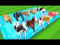Wild Animals Transformation into Farm Animals in Water Pool ( ) Zoo Animals Transformation into Farm Animals in Outdoor Swimming Pool - Wild An. Finger Family Song, Family Songs, Zoo Animals, Wild Animals, Gross Anatomy, Cartoon Gifs, Grande, Baby Shower, Engagement Rings