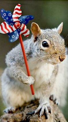 Happy Fourth y'all... << Today's dose of squirrel cuteness. #waitingforRedsandGrays