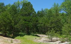 Coming soon....Don Robinson State Park   Missouri State Parks