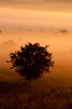trees in the fog by Francisco-Koek on 500px