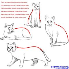 how do you draw a warrior cat | Draw a Realistic Cat, Draw Real Cat, Step by Step, Realistic, Drawing ...