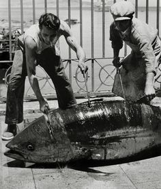Herbert LIST :: Cutting the fish into smaller pieces is a hard and bloody work / Favignana, Sicily, Italy, 1951