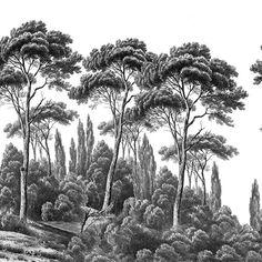 Pins et cyprès Noir et Blanc - Ananbô - Decofinder